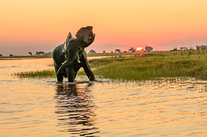 cruise_on_the_chobe_river