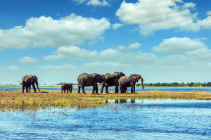 okavango_delta_excursion