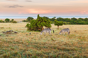 maasai_mara_national_reserve
