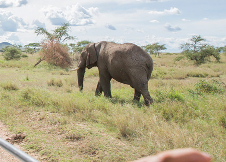 africa elephant safari tour
