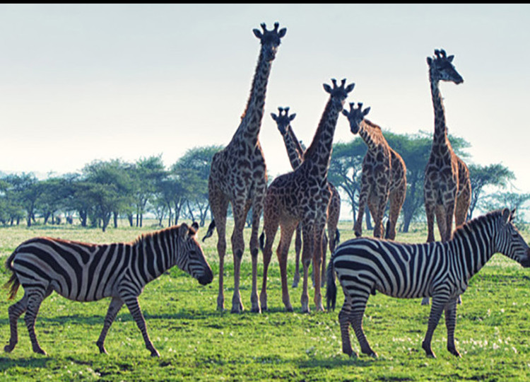 africa-group-tours