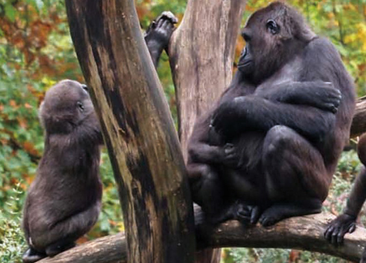 Troop to the Gorillas | Topdeck Travel