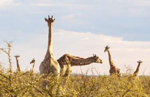 South West Safari 19 Day