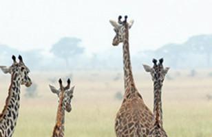 Sun & Safari