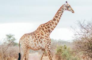 22 Day Zanzibar, Victoria Falls & Kruger