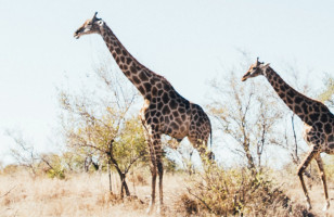 Sun & Safari | Topdeck Travel